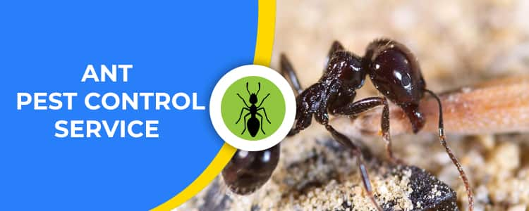 Ant Control Wright