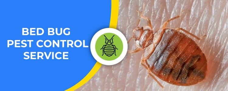 Bed Bug Control Wright