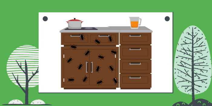 Have Pest Infestation In The Kitchen? Here Is How You Can Prevent It